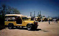 Tucson Attraction - Sunshine Jeep Tours