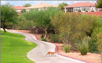 Views Golf Club At Sun City Oro Valley