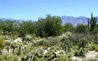Oro Valley Building Lot on Coyote Blue