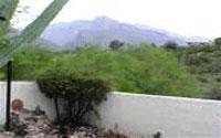 Tucson Home on Desert Tree