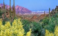 Saguaro Ranch Homes